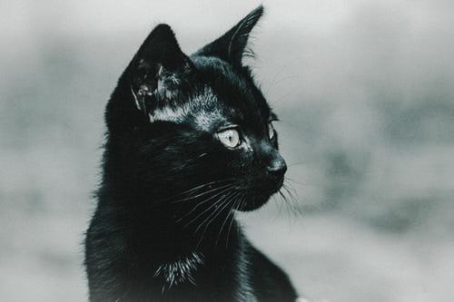 現代の野良猫として、子猫たちが選んだ生き方とは?